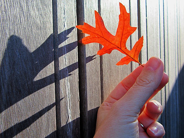 Autumn, Autumn Leaf, Shadow, Season, Colors