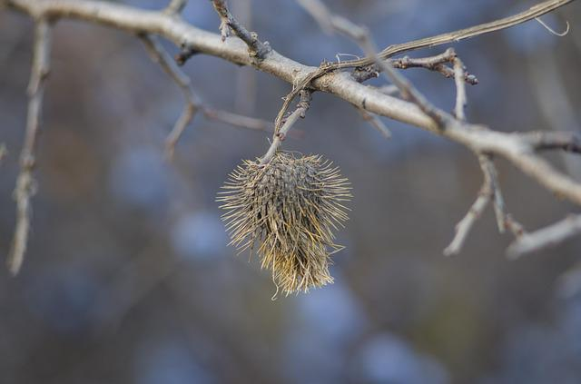 Barb, Branch, Autumn, Flower, Plant, Bloom, Weed