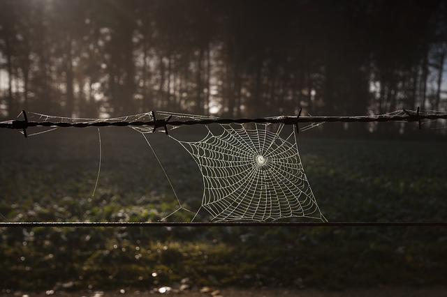Cobweb, Barbed Wire, Autumn Mood, Autumn, Network