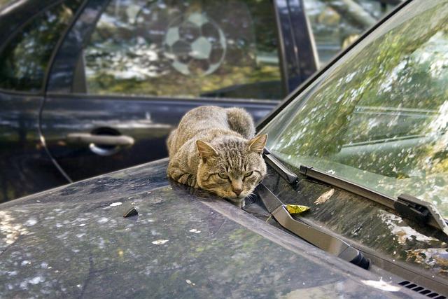 Cat, Machine, Janitor, Dream, Autumn, Heat, Yard