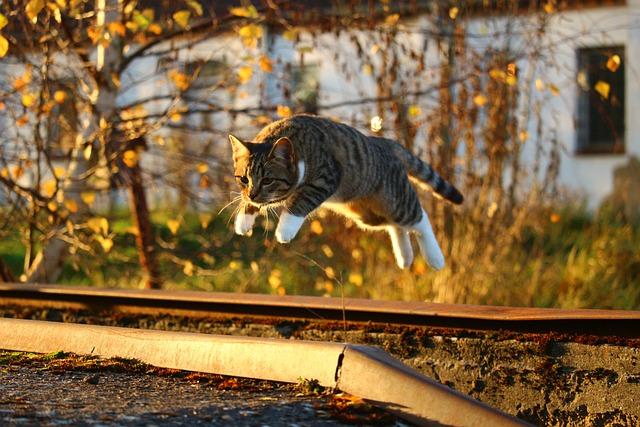 Cat, Autumn, Fall Foliage, Evening Light, Kitten