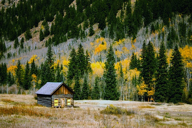 Colorado, Fall, Autumn, Foliage, Forest, Trees, Woods