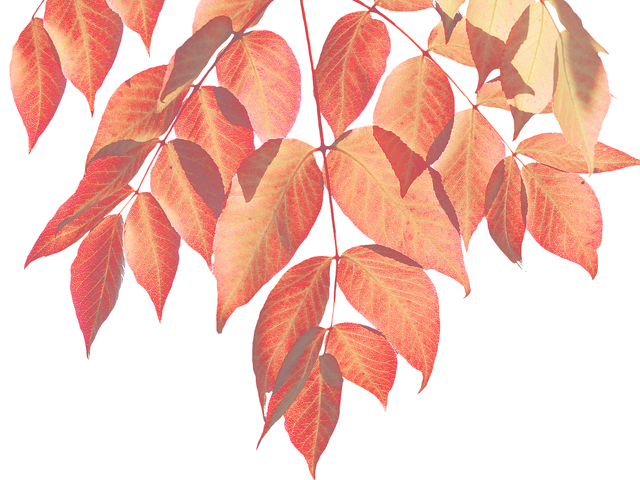 Autumn, Leaves, Nature, Leaf, Colorful Leaf