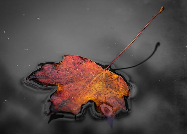 Foliage, Autumn, Nature, Autumn Leaf, Autumn Colors
