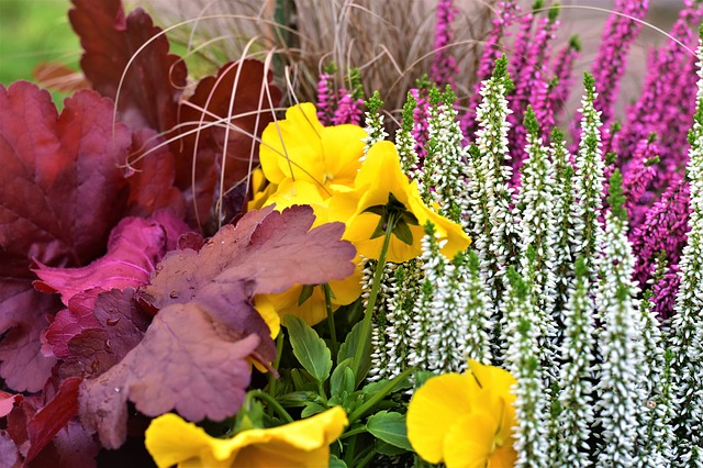 Autumn, Decoration, Heather, Pansy, Ornamental, Colors