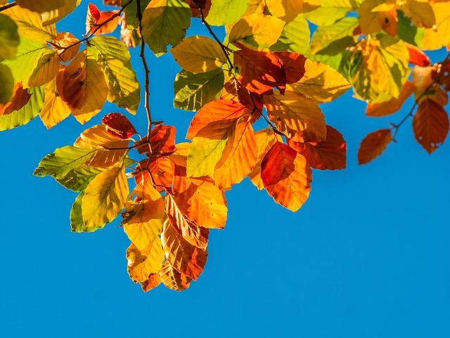Leaves, Autumn Colours, Bright, Autumn, Emerge