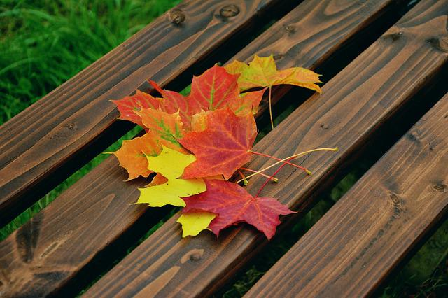 Fall Foliage, Maple Leaves, Autumn Colours, Emerge