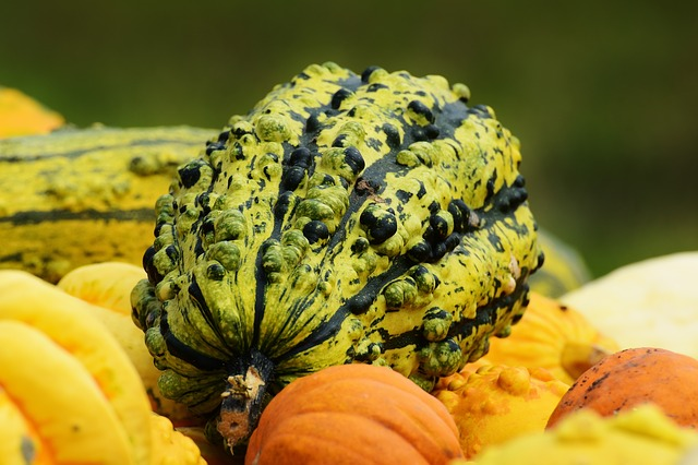 Pumpkins, Autumn, Autumn Decoration, Harvest