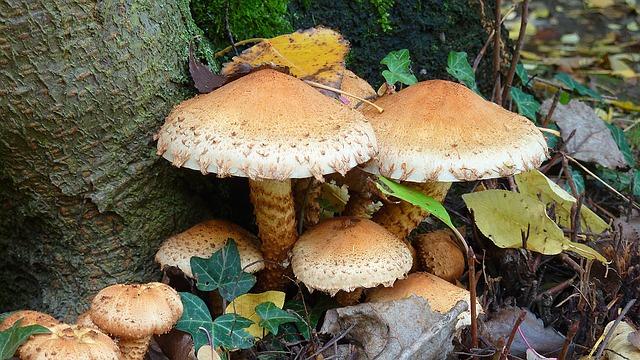 Autumn, Autumn Leaf, Fall Color, Leaves, Mushrooms