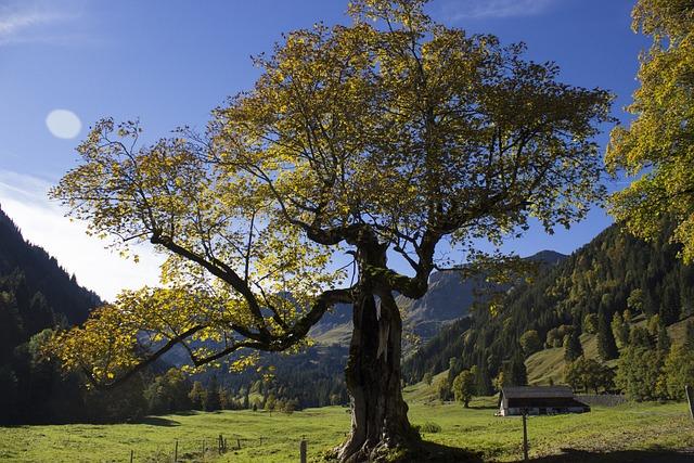 Tree, Autumn, Landscape, Plane, Fall Color