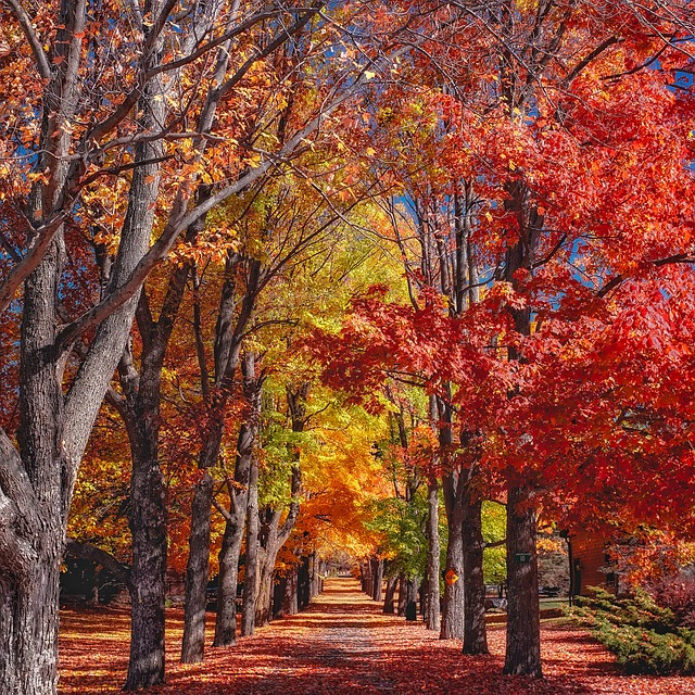 Fall, Autumn, Trees, Colorful, Foliage, Canopy