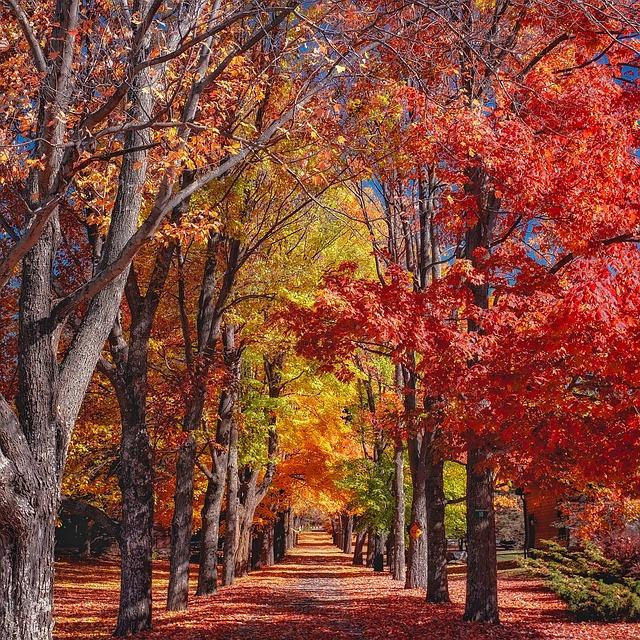 Fall, Autumn, Trees, Colorful, Foliage, Canopy