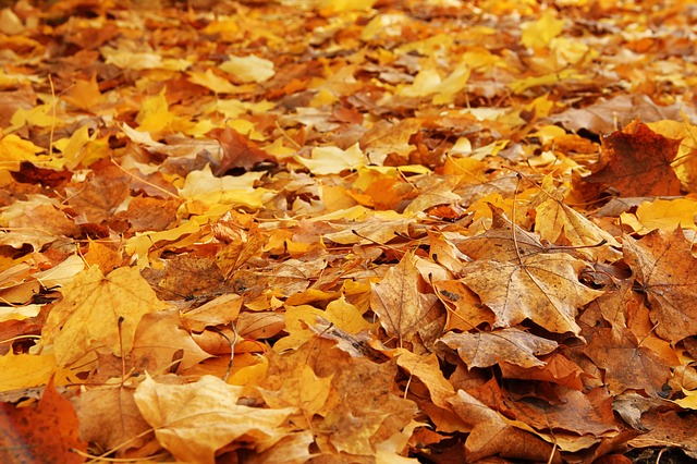 Leaves, Forest, Autumn, Fall Foliage, Forest Floor