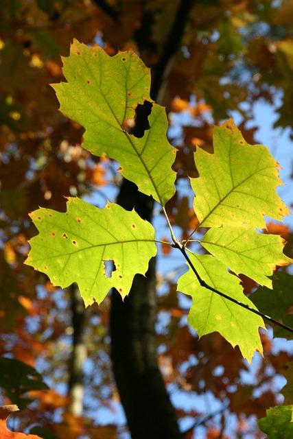 Autumn, Fall Foliage, Golden Autumn