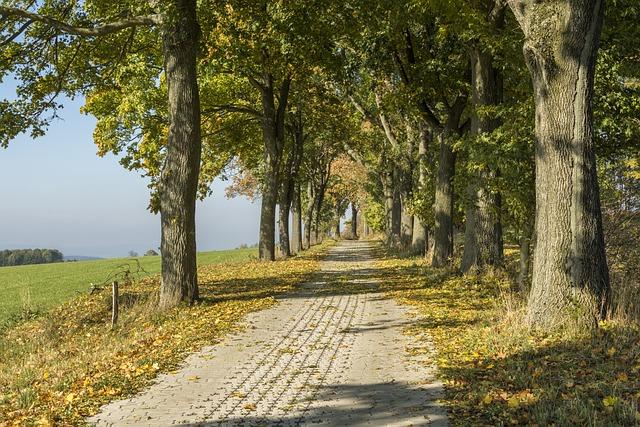 Ore Mountains, Autumn, Scheibenberg, Fall Foliage
