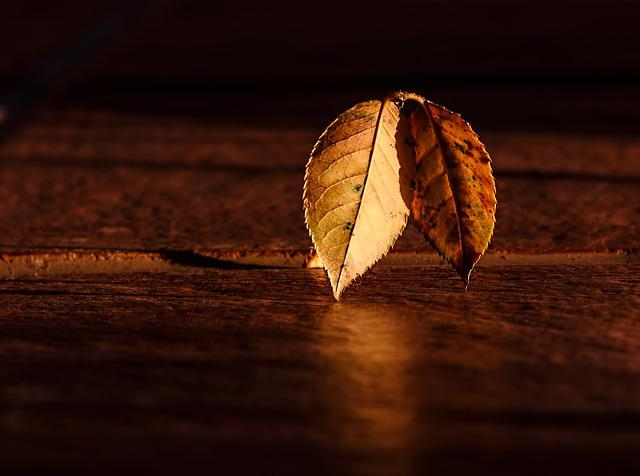 Leaf, Autumn, Wood, Contrast, Dark, Abstract, Fall