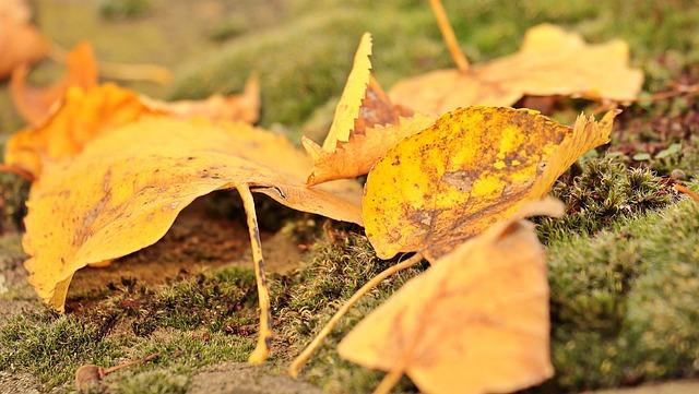 Fall Leaves, Autumn, Mood, Leaves, True Leaves