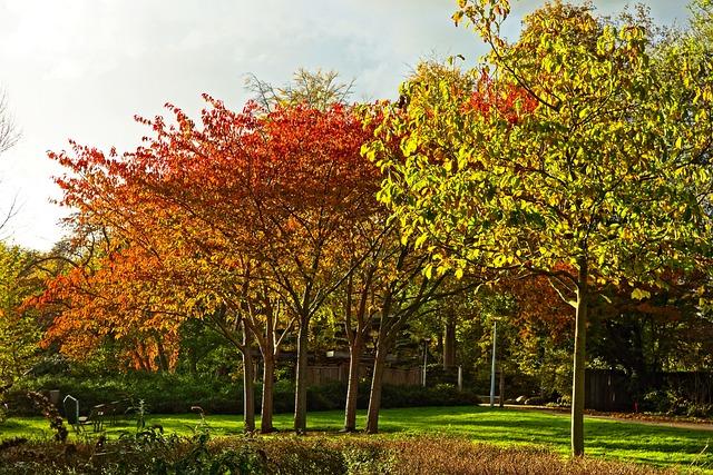 Trees, Autumn Trees, Autumn Foliage, Autumn Colors