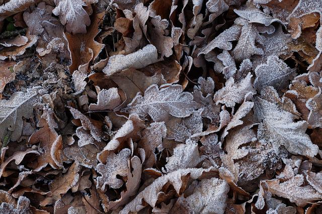Frost, Foliage, Autumn, Nature, Icing, Cold