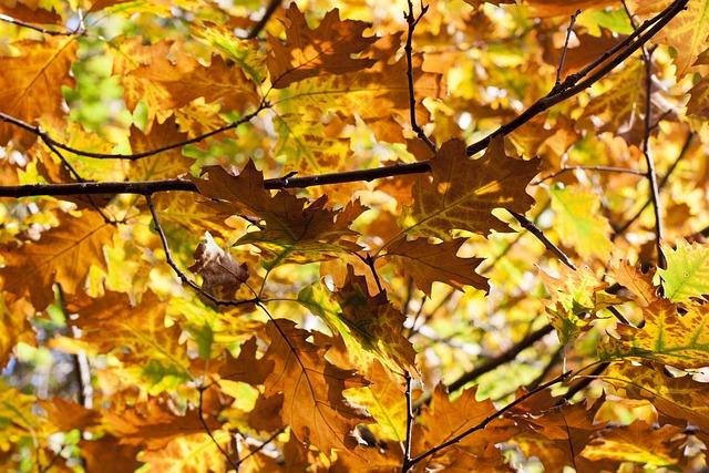 Leaves, Autumn, Oak, Forest, Nature, Autumn Forest