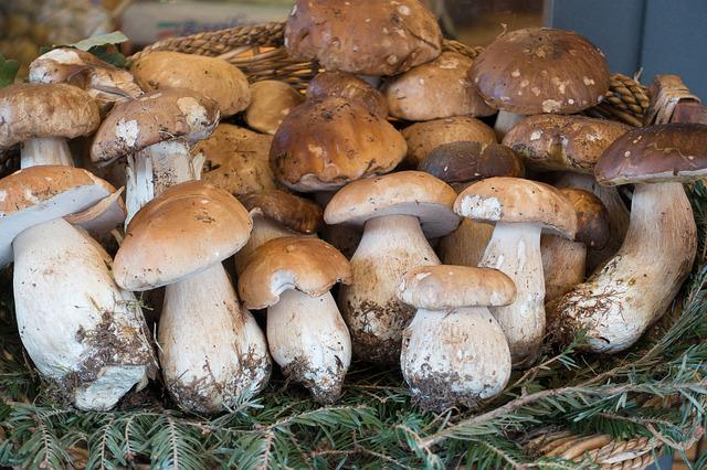 Mushroom, Cep, Basket, Nature, Autumn, Forest, Eat