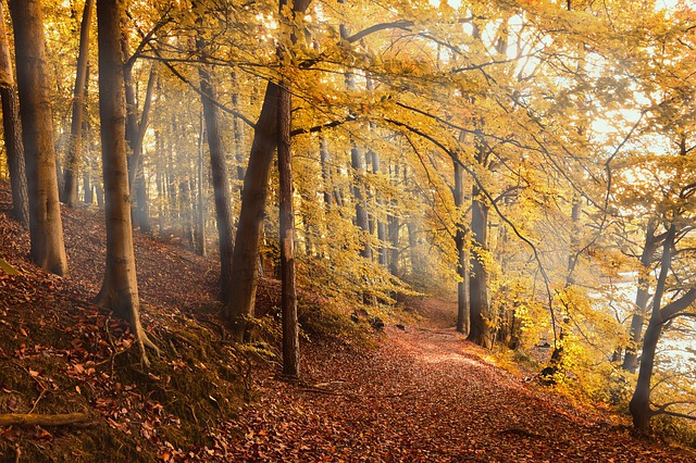 Autumn Forest, Forest, Fall Foliage, Fall Color, Emerge