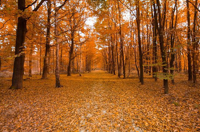 Forest, Autumn, Orange, Colorful, Nature, Landscape