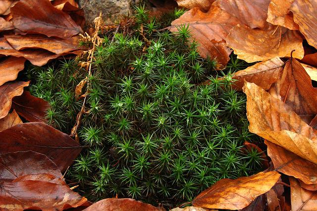 Moss, Dew, Leaves, Autumn, Forest Litter, Forest