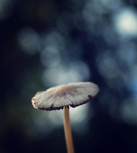 Autumn, Forest, Autumn Forest, Mushroom