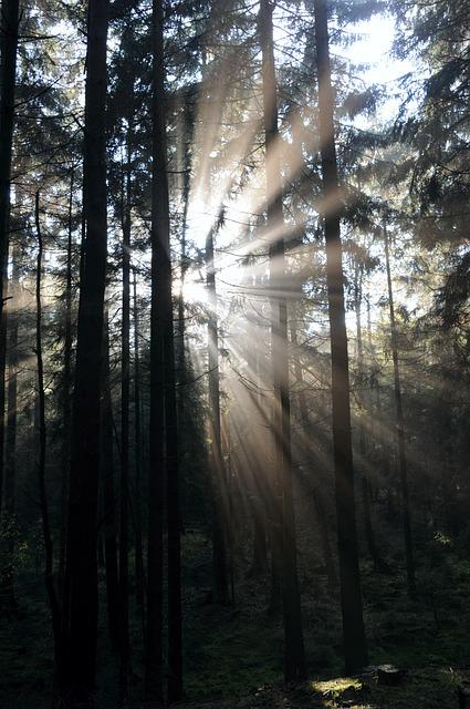 Forest, Sunbeam, Sunlight, Autumn Forest, Mystical