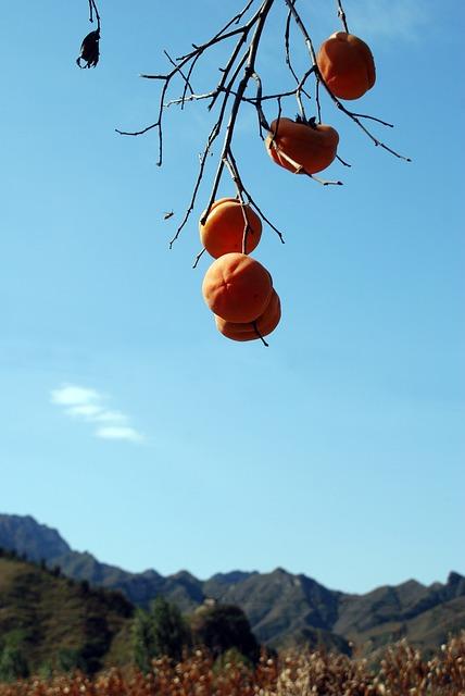 Persimmon, Autumn, Fruit