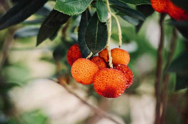 Strawberry Tree, Fruit, Vitamins, Autumn Fruit, Red