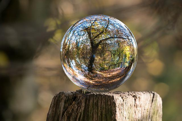 Glass Ball, Autumn, Tree, Gnarled, Globe Image