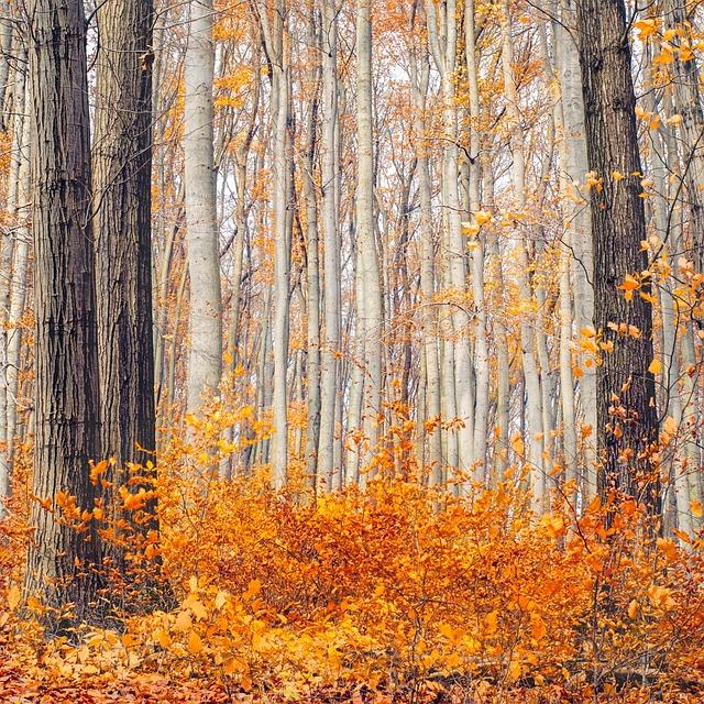 Autumn, Autumn Colours, Golden Autumn, Autumn Mood