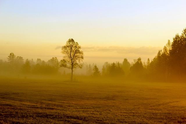 Autumn, Tree, Field, Golden Autumn, Nature