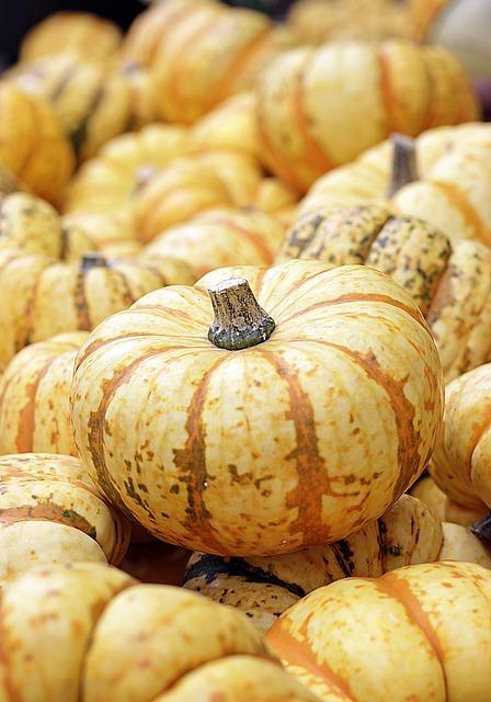 Pumpkin, Autumn, Food, Fruit, Harvest, Halloween