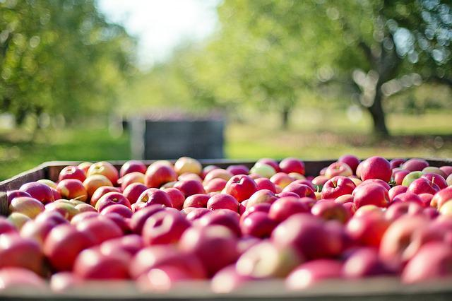 Apples, Fall, Autumn, Fruit, Nature, Food, Harvest