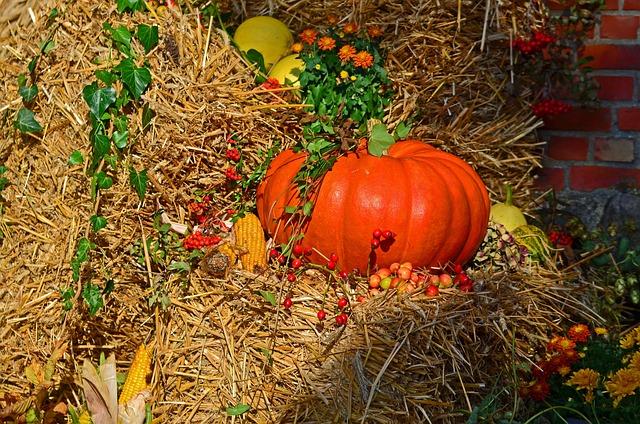Harvest, Harvest Festival, Pumpkin, Autumn