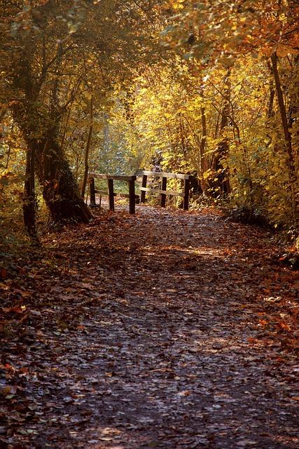 Autumn, Heilbronn, Baden Württemberg, Swiss Francs
