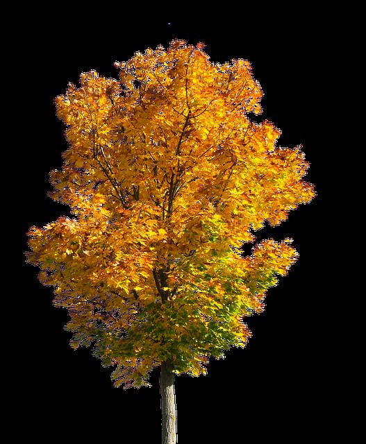 Nature, Tree, Autumn, Leaves, Fall Foliage, Isolated