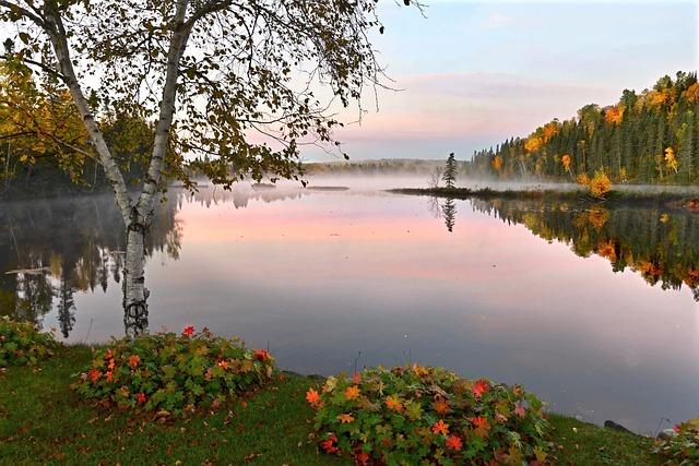Fall, Autumn Landscape, Autumn Leaves, Tree, Birch