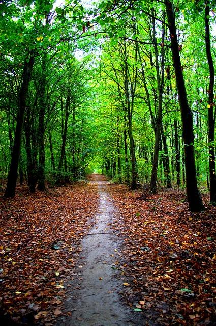 Autumn Landscape, Nature, Poznan