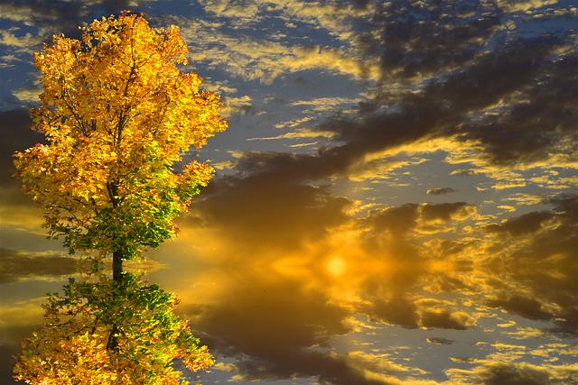 Autumn, Trees, Autumn Landscape, Nature, Fall Foliage