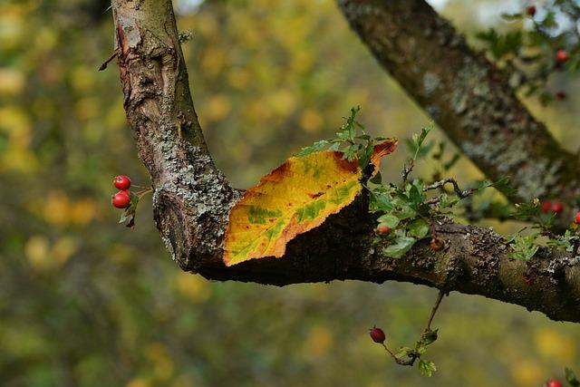 Autumn Leaf, Autumn Colours, Fall Color, Autumn
