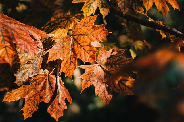 Autumn, Orange, Autumn Leaf, Nature, Autumn Orange