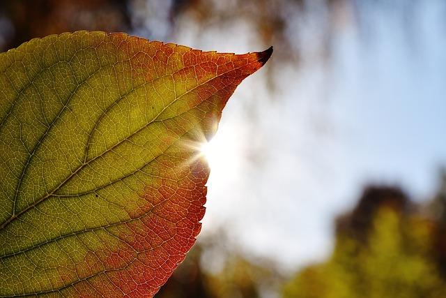 Leaf, Close Up, Backlighting, Sun, Autumn, Colorful