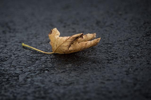 Leaf, Leaves, Foliage Leaf, Autumn Leaf, Ground, Road