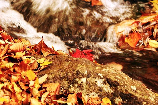 Autumn, Leaves, I, The Leaves, Autumn Leaves, Leaf