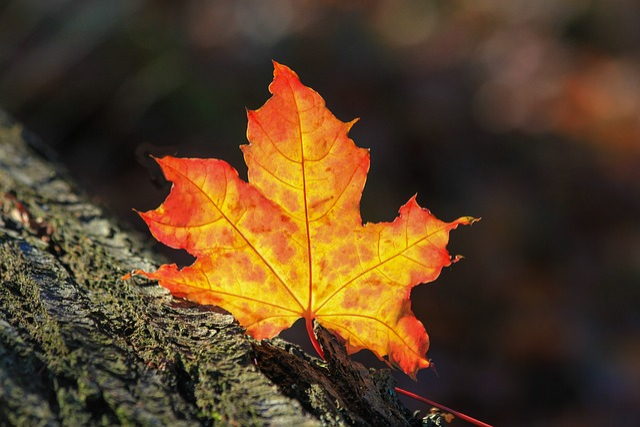 Autumn Leaf, Autumn, Nature, Tree, Bark, Time Of Year