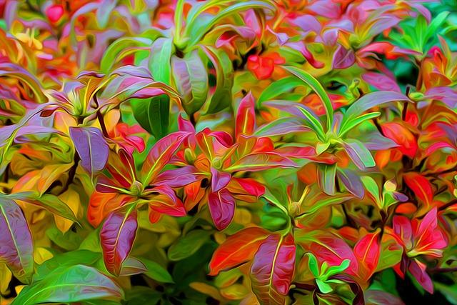 Autumn, Autumn Leaves, Colors, Leaves